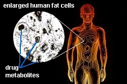 drug metabolites in fat cells